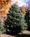 West Virginia Fraser