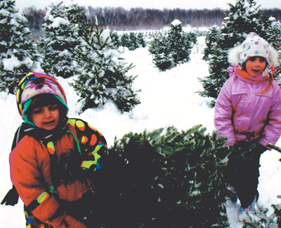 Cut your own Christmas Tree!