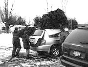 We'll help you load your tree
