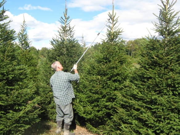Top Ten Christmas Trees