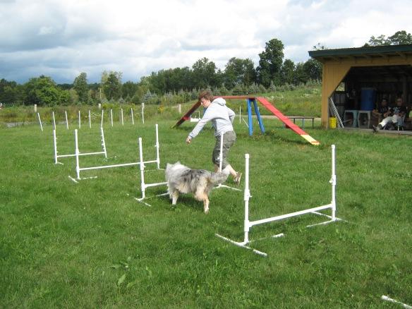 All breeds can enjoy dog agility
